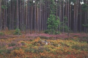 EstonianForets