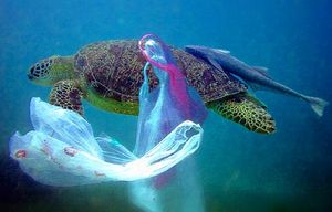 Turtle-plasticbag