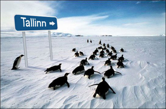 Tallinn_penguins